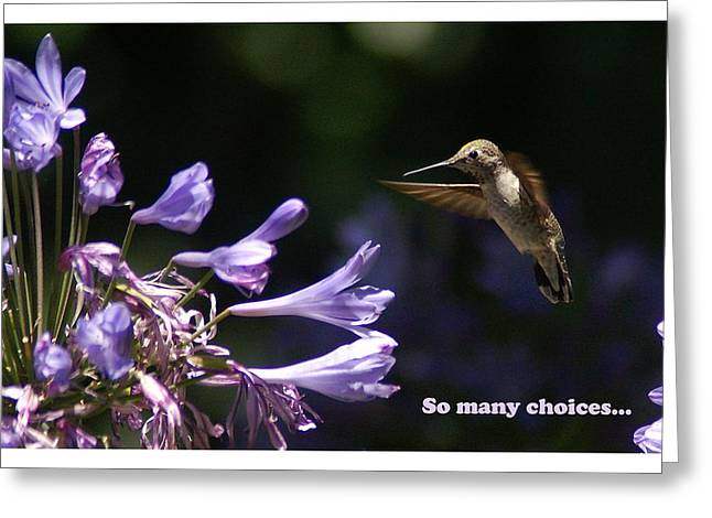 So Many Choices Greeting Card