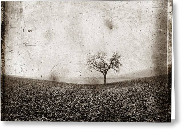 Solitary Tree In Limagne Landscape. Auvergne. France Greeting Card