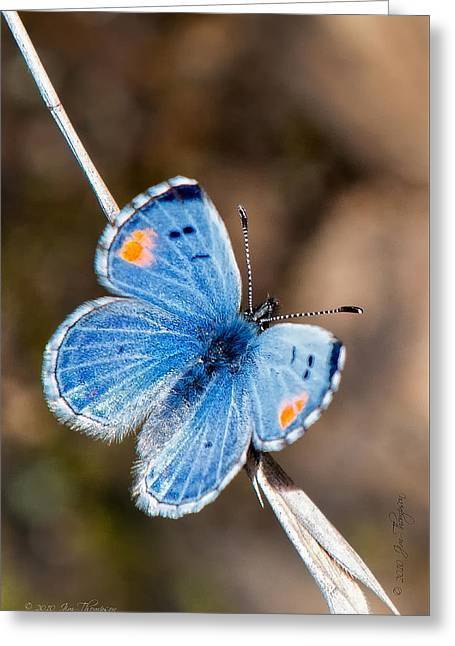 Sonoran Blue Greeting Card by Jim Thompson