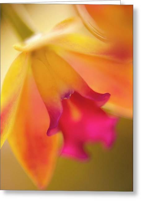 Sophrolaeliocattleya Orchid Greeting Card