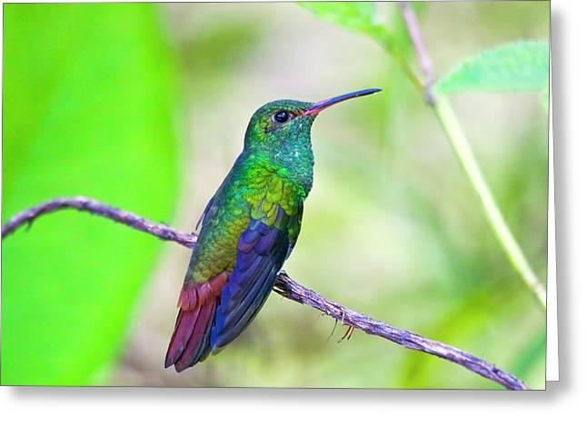 South America, Costa Rica, Sarapiqui Greeting Card