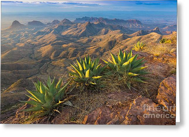 South Rim Morning Greeting Card by Inge Johnsson