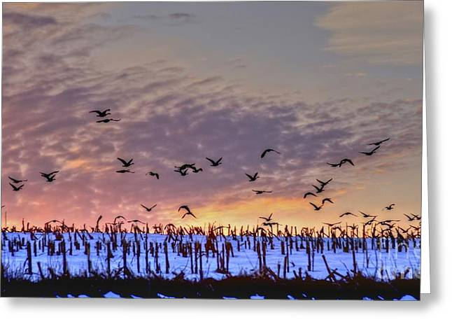 Southbound Greeting Card by Steve Ratliff