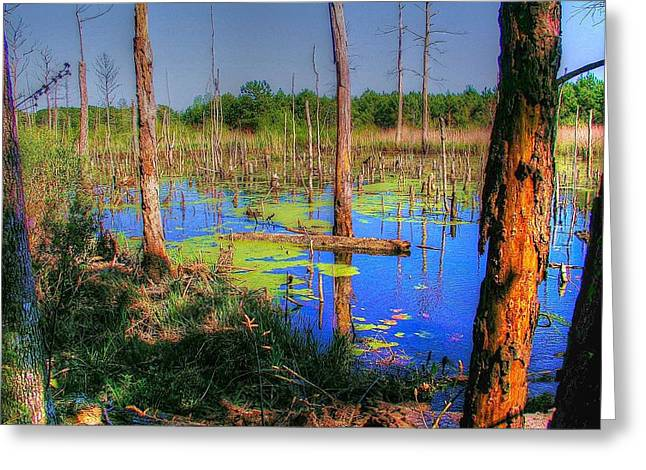 Southern Swamp Greeting Card