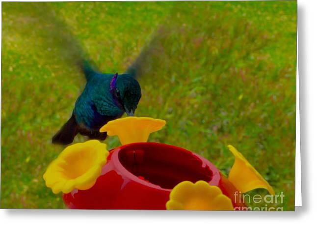 Sparkling Violetear Hummingbird Greeting Card by Al Bourassa