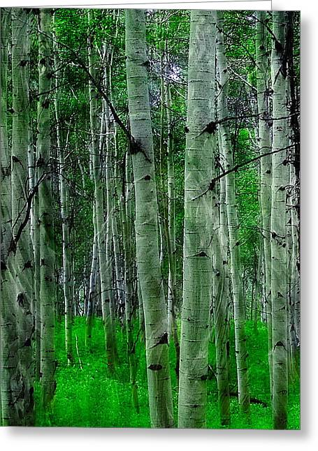 Greeting Card featuring the photograph Spectacular Aspens by Cindy Greenstein