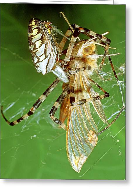 Spider Eating Moth Greeting Card