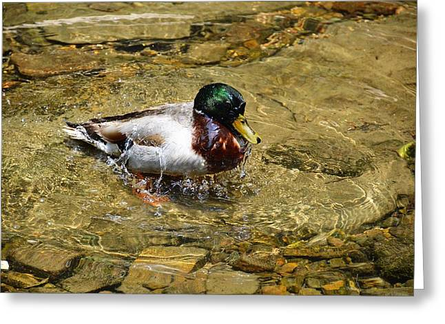 Splash Greeting Card by JAMART Photography