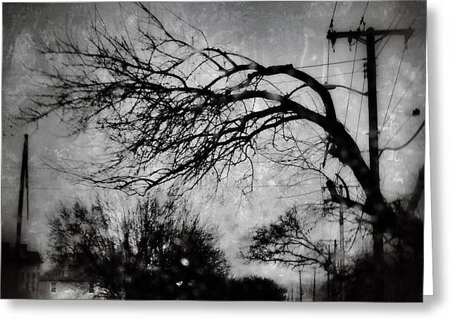 Spooky Tree Greeting Card by Toni Martsoukos