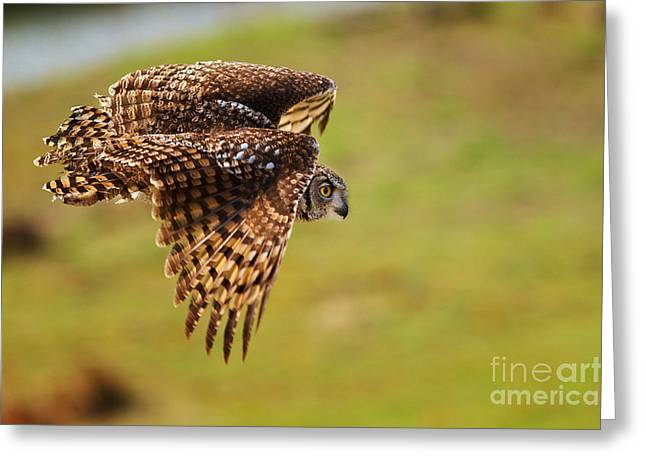 Spotted Eagle Owl In Flight Greeting Card