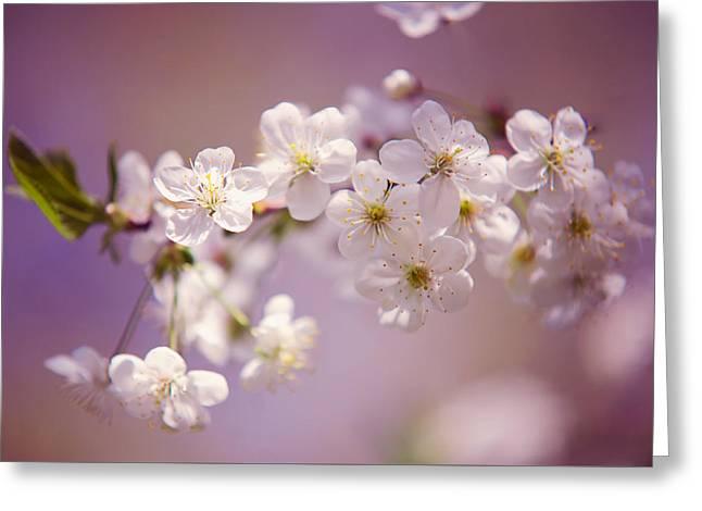 Spring Cherry Tree Branch Greeting Card