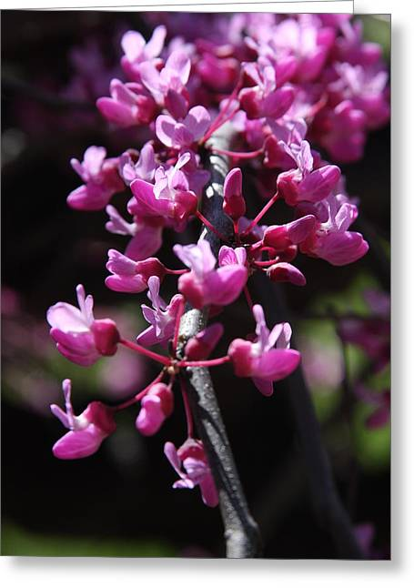 Greeting Card featuring the photograph Spring Colors by Vadim Levin
