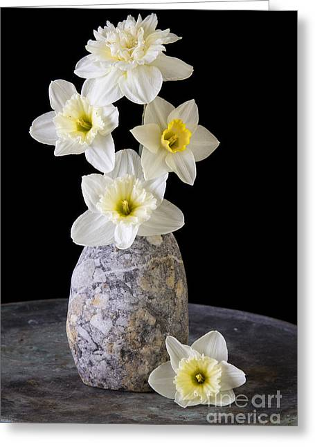 Spring Daffodils Greeting Card by Edward Fielding