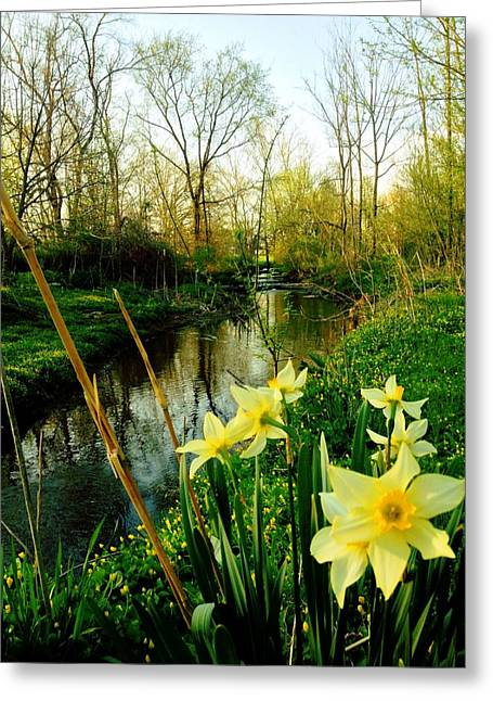 Spring In Prospect Greeting Card by Andrew Martin