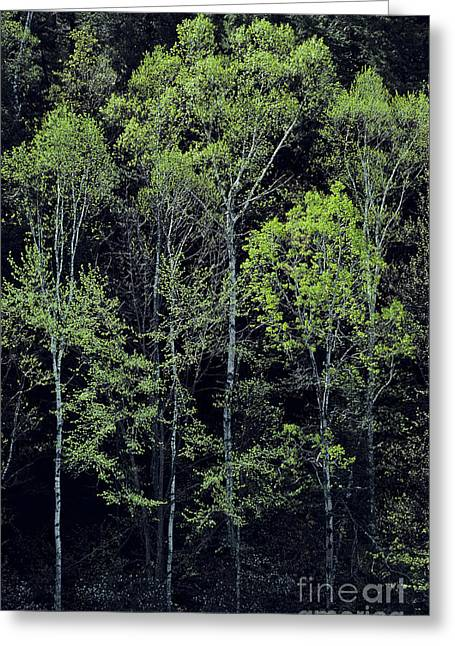 Greeting Card featuring the photograph Spring Lights by Alan L Graham