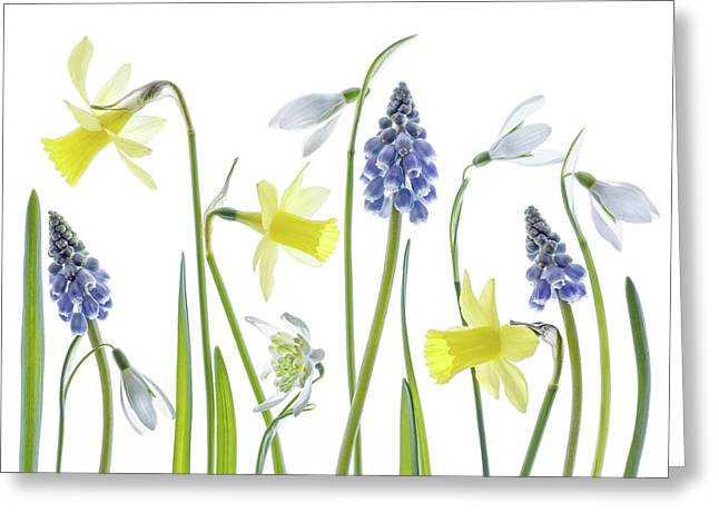 Spring Greeting Card