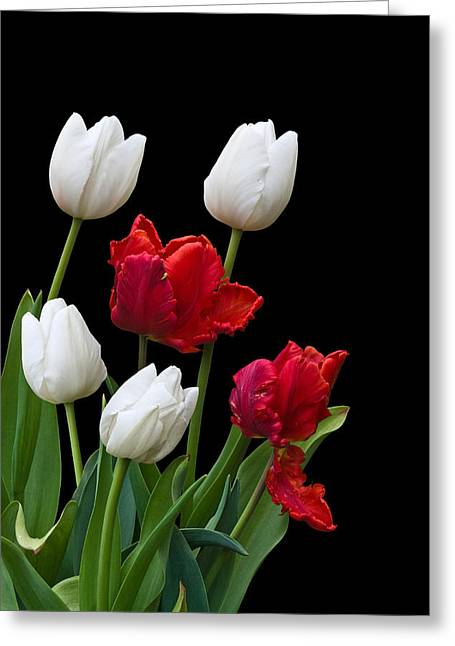 Spring Tulips Greeting Card by Jane McIlroy