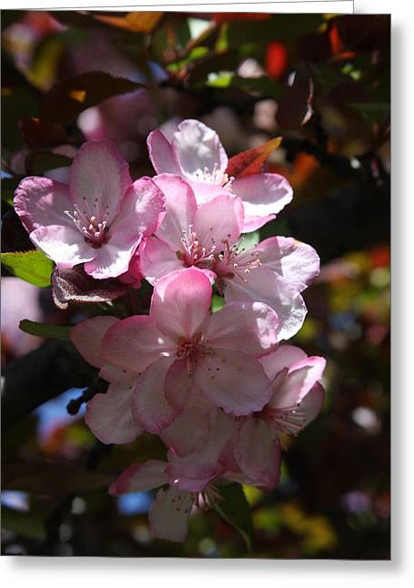 Greeting Card featuring the photograph Spring by Vadim Levin