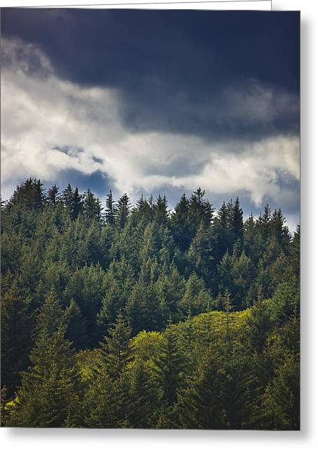 Spruce Tree Forest, Chiniak Bay, Kodiak Greeting Card by Kevin Smith