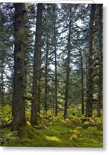 Spruce Tree Forest In Autumn, Kodiak Greeting Card by Kevin Smith