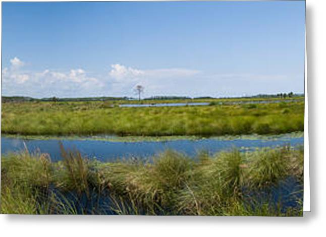 St. Marks National Wildlife Refuge Greeting Card