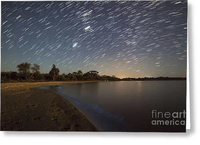 Star Trails And Bioluminescence Greeting Card by Philip Hart