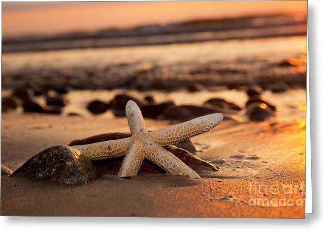 Starfish On The Beach At Sunset Greeting Card
