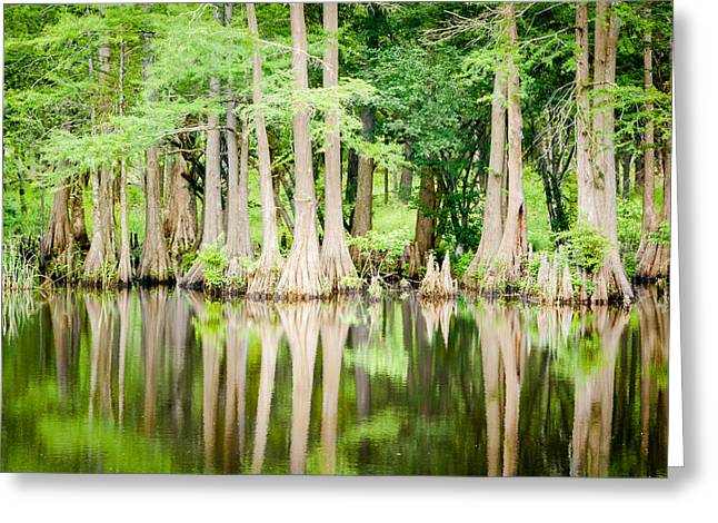 Still Waters And Cypress Trees Greeting Card by Geoff Mckay