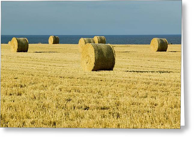 Straw Bales In A Field Greeting Card