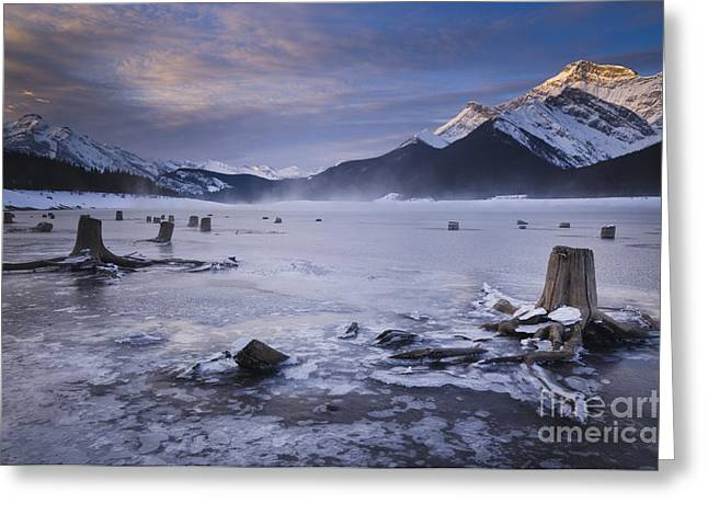 Stumps At Spray Lakes Greeting Card by Ginevre Smith