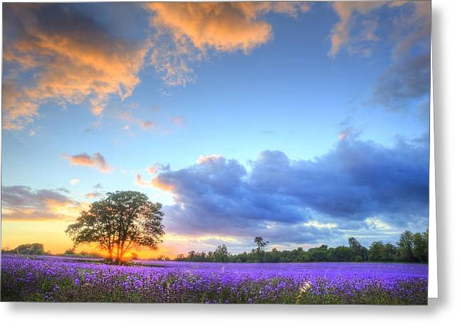 Stunning Atmospheric Sunset Over Vibrant Lavender Fields In Summ Greeting Card by Matthew Gibson