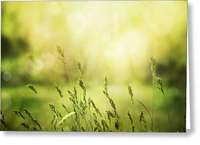 Summer Background Greeting Card by Mythja  Photography