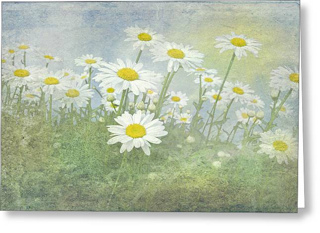 Summer Daisies Greeting Card