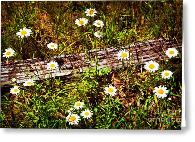 Summer Flowers On The Blue Ridge Parkway 7653 Greeting Card by Dan Carmichael