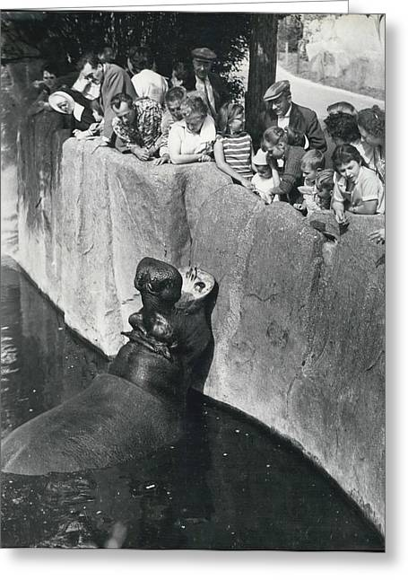 Summer Snaps At The Zoo Greeting Card by Retro Images Archive