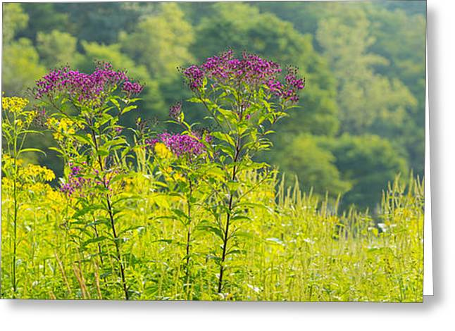 Summer Weeds, Cuyahoga Valley National Greeting Card by Panoramic Images