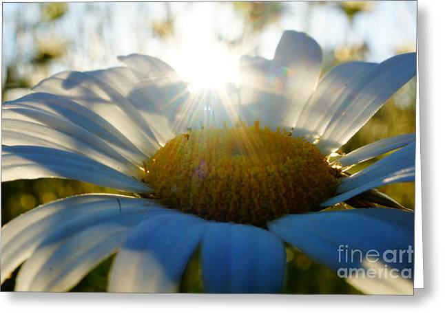 Sun Flower Greeting Card by Kandids By Katy