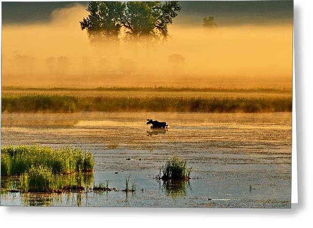 Sun Kissed Moose Greeting Card by Annie Pflueger
