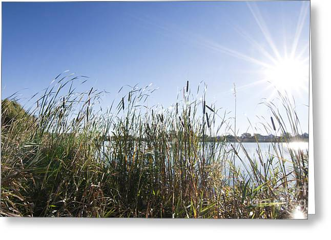 Sunburst Greeting Card by Patty Colabuono