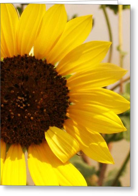 Greeting Card featuring the photograph Sunflower by Diane Miller