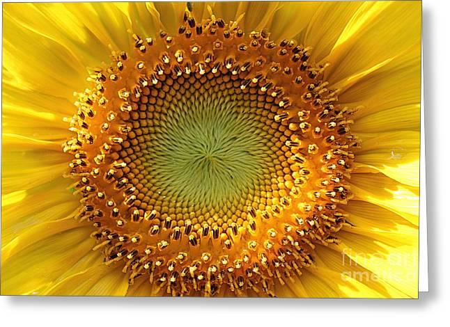 Sunflower Greeting Card by Lisa L Silva