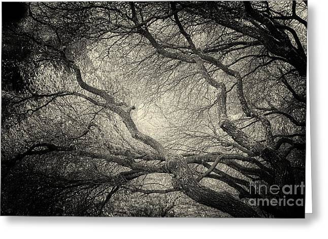 Sunlight Through Branches Of A Tree Greeting Card