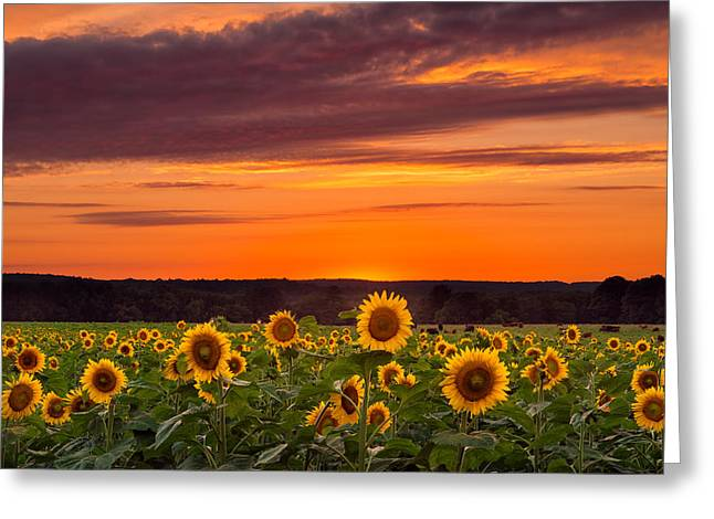 Sunset Over Sunflowers Greeting Card by Michael Blanchette