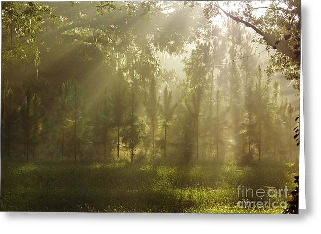 Sunshine Morning Greeting Card