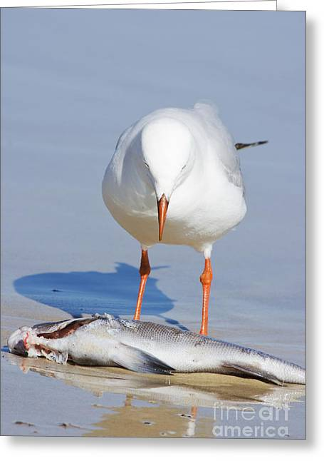 Surprised Seagull Greeting Card by Jorgo Photography - Wall Art Gallery