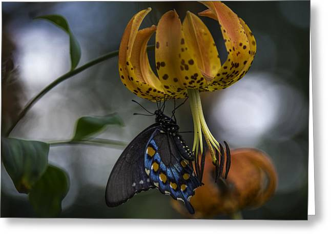 Swallowtail On Turks Cap Greeting Card