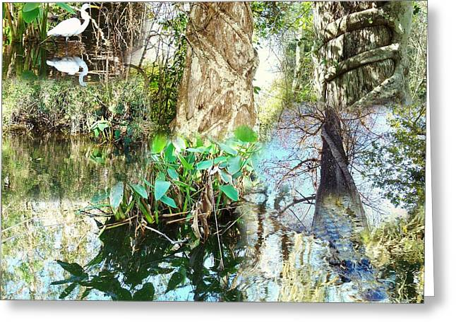 Swamp Life Greeting Card by Van Ness