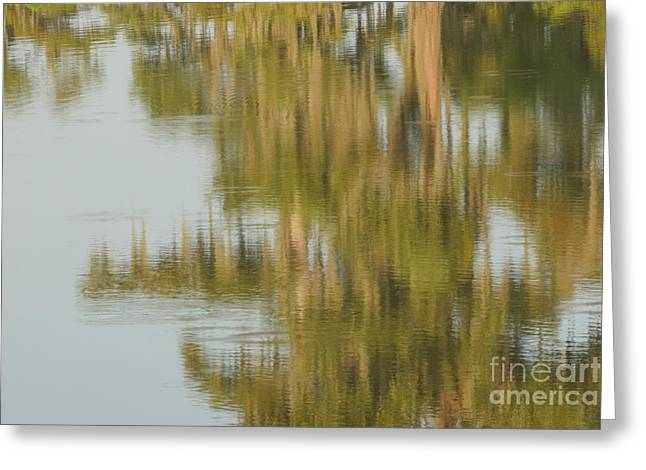 Swamp Reflections Greeting Card by Kelly Morvant
