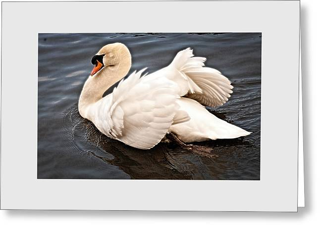 Swan One Greeting Card
