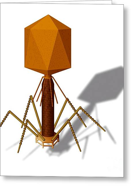 T4 Bacteriophage, Artwork Greeting Card by Art for Science